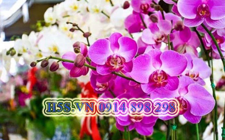 Gửi hoa lan từ thái lan về việt nam