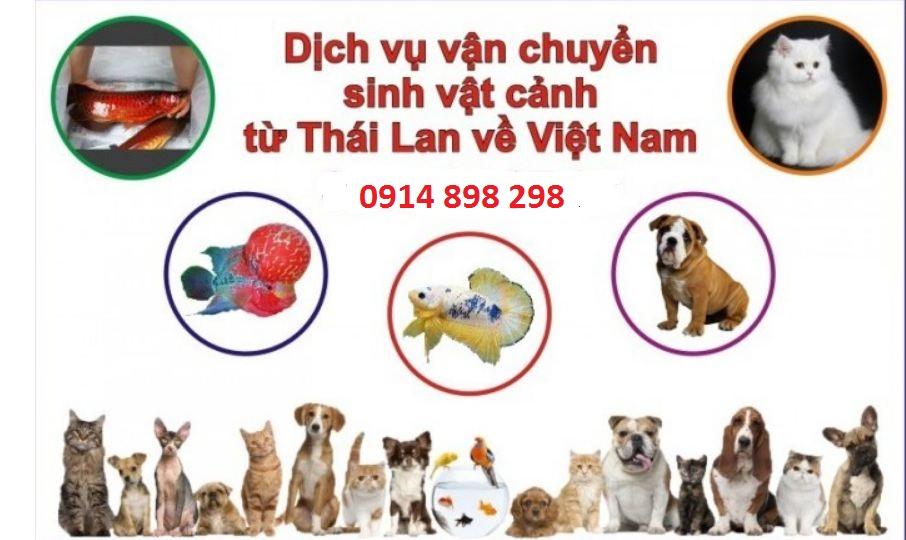 Vận chuyển thú cưng từ Thái Lan về Việt Nam