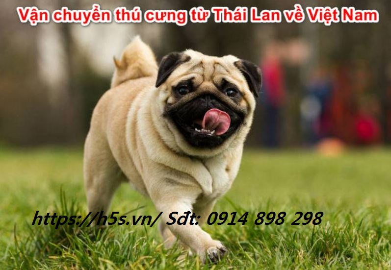 Cách nhập chó từ Thái về Việt Nam